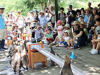 ペンギンさんに「流しアジ」 小諸市動物園で今夏も