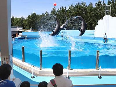 イルカともっと仲良く 触れ合い企画を充実 マリンピア
