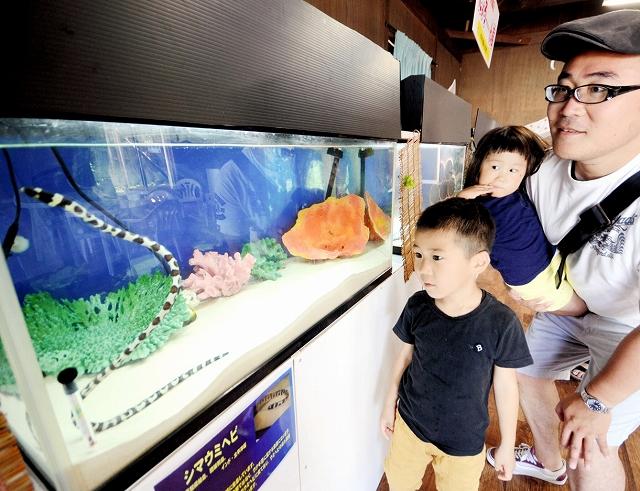 シマウミヘビに見入る家族連れ=20日、福井県坂井市の越前松島水族館