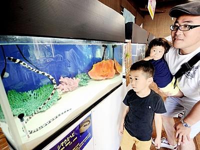 にょろ~ん生物一堂 坂井市松島水族館、20種100匹