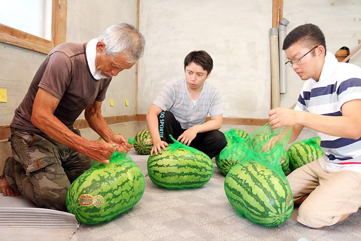 中島さん(中央)に教わりながらジャンボ西瓜を梱包する参加者=中島農園