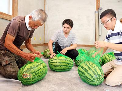 ジャンボ西瓜の梱包作業に汗 入善・移住事業ツアー