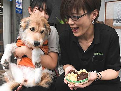 「肉球感」話題のドーナツ 日本聴導犬協会、宮田の企業とコラボ