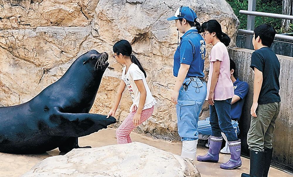 アシカの訓練を体験する児童=能美市のいしかわ動物園