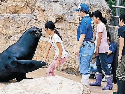アシカと握手 いしかわ動物園でサマースクール