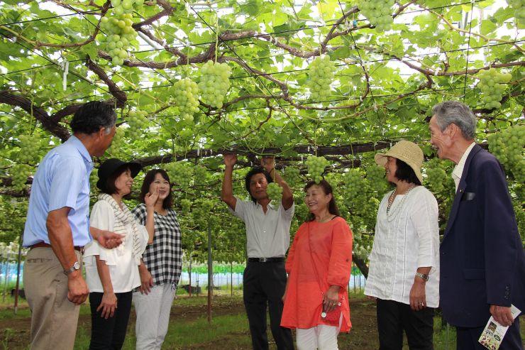 順調に生育したブドウを視察する農園関係者ら=1日、新潟市南区