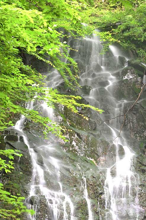 緑に囲まれた岩場を清水が勢いよく流れ落ちる滝山不動滝の「二の滝」=青木村奈良本