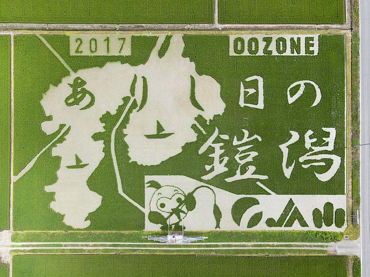 鎧潟の形を描いた田んぼアート=新潟市西蒲区大曽根