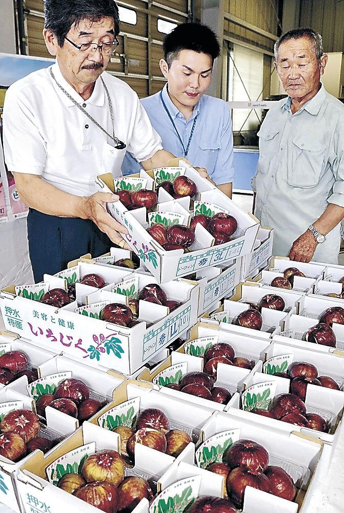 初出荷されたイチジク=宝達志水町北川尻のJAはくい押水集出荷場