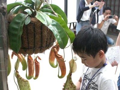 すごい捕食の技 新潟県立植物園で食虫植物展
