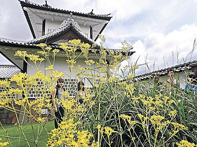 オミナエシ揺れ、残暑に秋の気配 金沢城公園