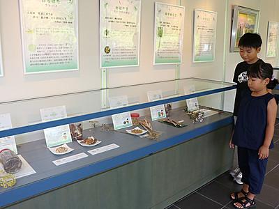 家持が見た薬草展始まる 高岡市万葉歴史館