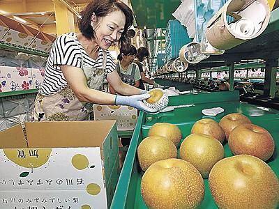新品種「加賀しずく」初出荷 県産ナシ、きょう市場デビュー