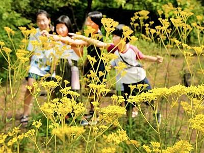 七草の花オミナエシが秋の趣 福井総合植物園プラントピア