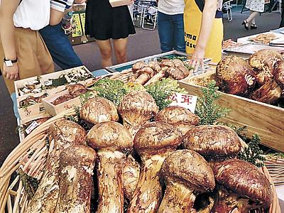 マツタケ、秋の香り 近江町市場に外国産並ぶ