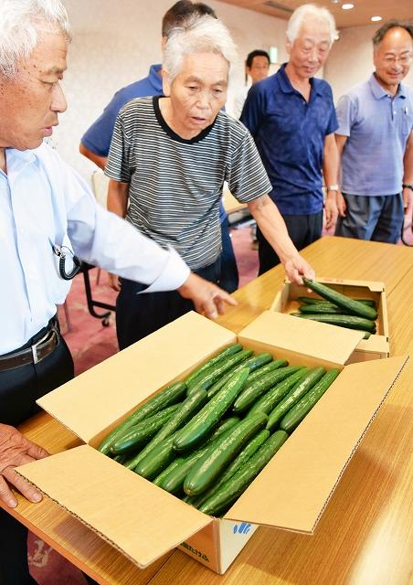 緑しきぶの出荷規格を確認する生産者ら=31日、福井県越前市のJA越前たけふ本店