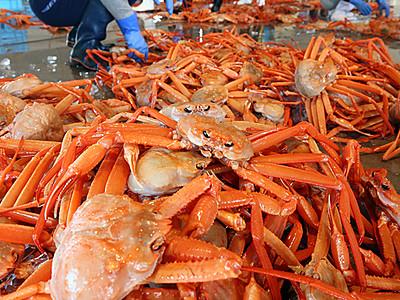 秋の味覚・ベニズワイ初競り 新湊漁港
