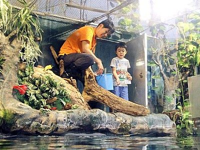 寺泊水族博物館 親子で仕事体験
