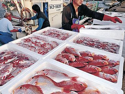 日本海から秋の幸 金沢港、底引き網漁の初物水揚げ