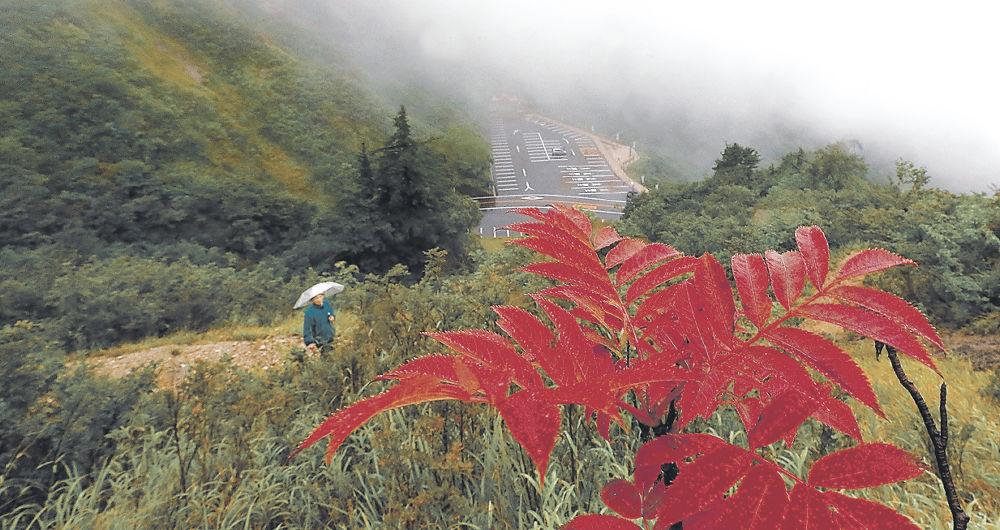 真っ赤に色づいたナナカマドの葉=白山白川郷ホワイトロードの三方岩駐車場付近