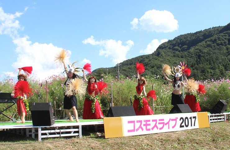 見頃を迎えたコスモスを背にダンスを披露する女性たち