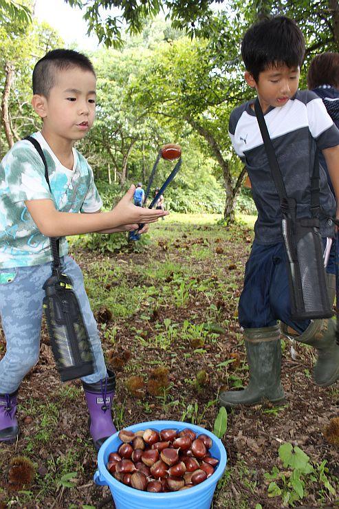 オープンした九島観光栗園でクリ拾いを楽しむ子どもたち=13日、阿賀町九島