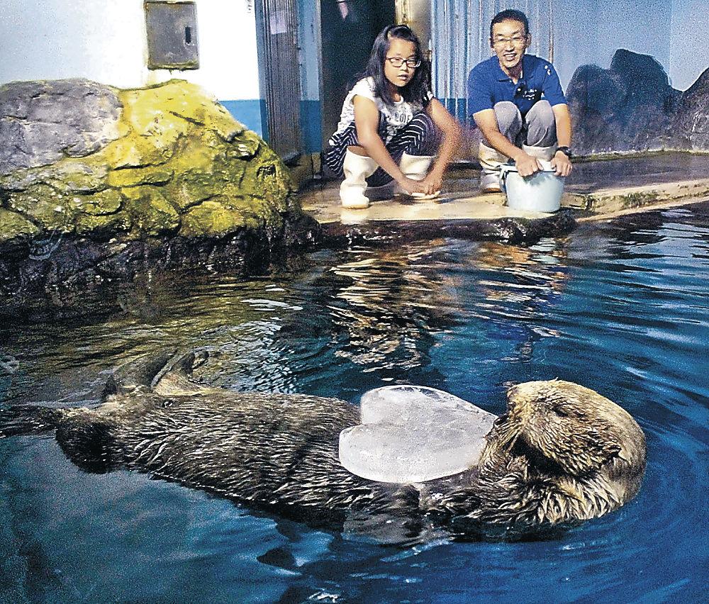 プレゼントされた氷を腹に抱えるラスカ=七尾市ののとじま臨海公園水族館