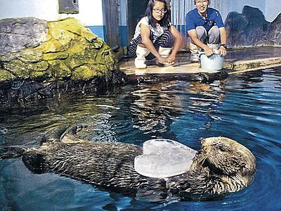 国内最高齢ラッコ、氷喜ぶ のとじま水族館、敬老の日