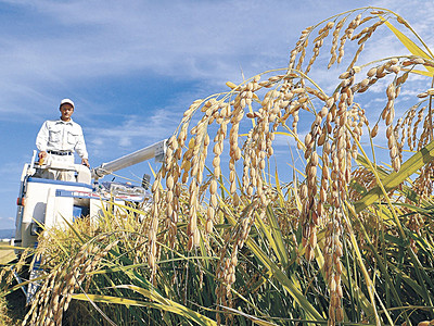 「ひゃくまん穀」収穫 県内トップ切り小松で