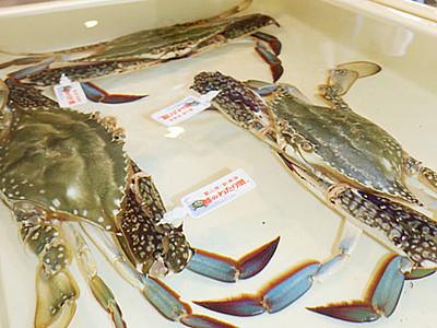 「越のわたり蟹」初競り 新湊漁港
