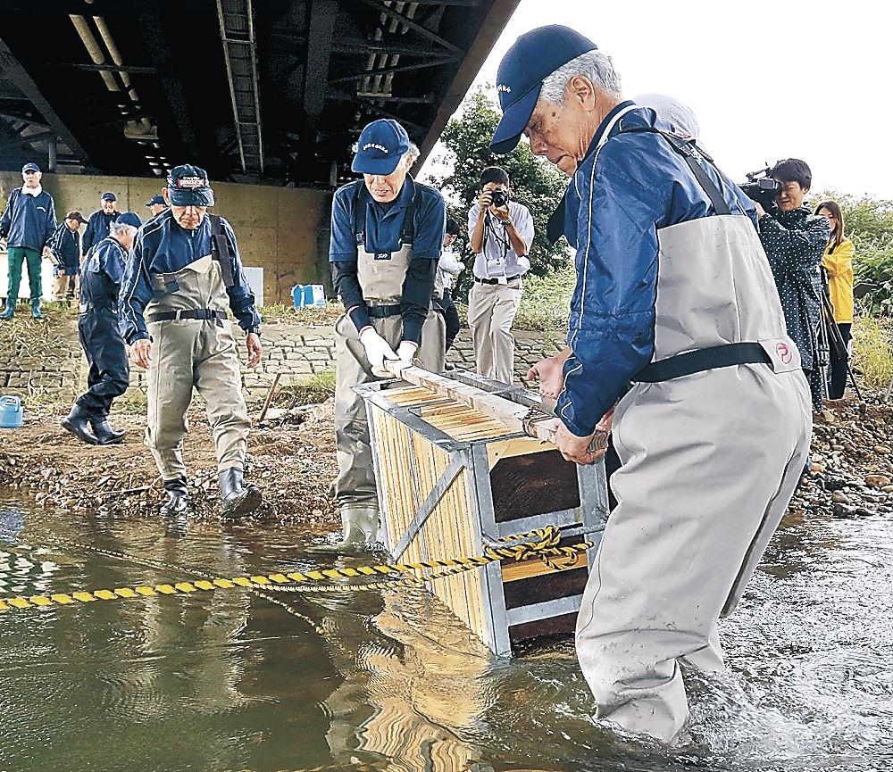 受精卵を川底に沈める組合員=金沢市示野中橋下の犀川