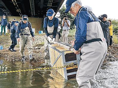 地アユ増加へ犀川に卵 金沢漁協