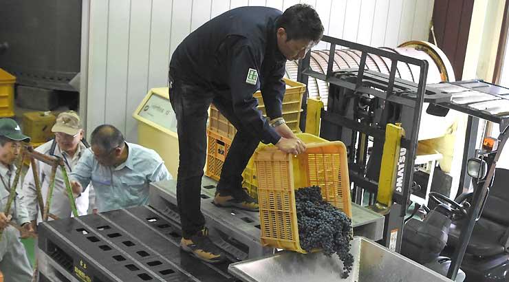ヤマソービニオンを破砕器に入れるマルス信州蒸溜所の竹平所長