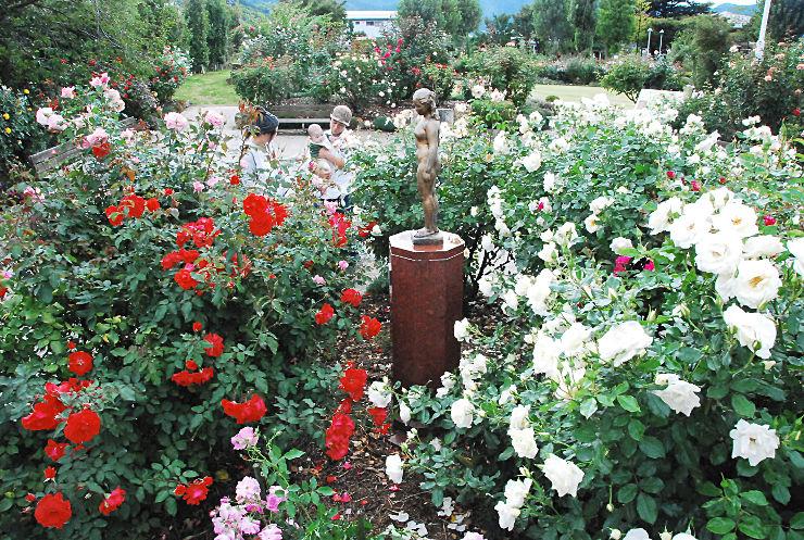 色とりどりのバラが咲き「秋のバラまつり」が始まった中野市の一本木公園