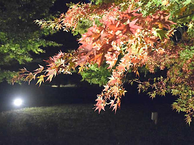 紅葉の「もみじ湖」ライトアップ 箕輪ダム湖、14日から