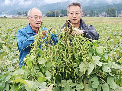 丹波黒大豆の枝豆収穫しよう 井口で21、22日