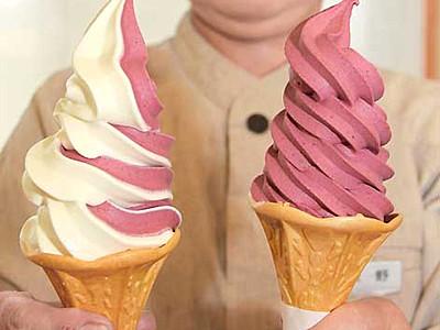 爽やか酸味、特産コンパラ 青木でソフトクリーム好評