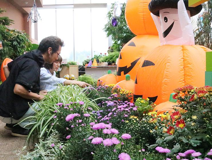 キクなど秋の花やカボチャの飾りで彩られた館内