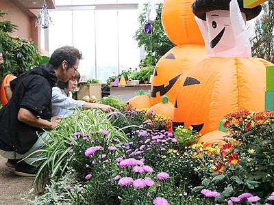 四季彩館でハロウィーン、秋の花々紹介 砺波