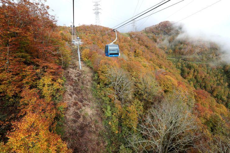 ゴンドラから見える紅葉=17日、湯沢町三国