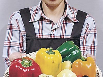 カラー野菜収穫 中能登・6色ピーマン