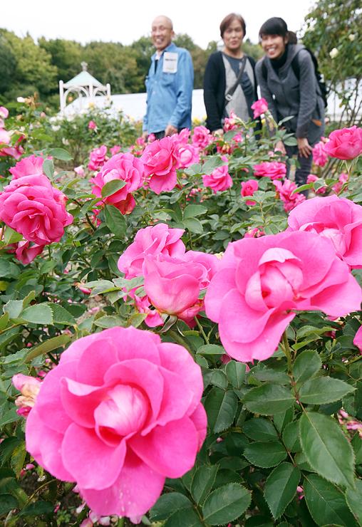 色鮮やかに咲く秋のバラ=氷見あいやまガーデン