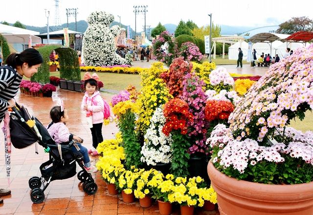 満開となった「菊のアートガーデン」=21日、福井県越前市の武生中央公園