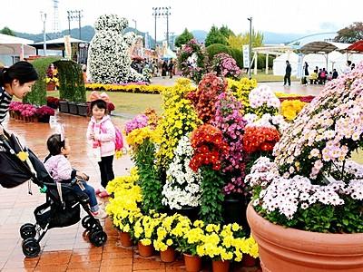 「菊のアートガーデン」満開 たけふ菊人形で撮影人気