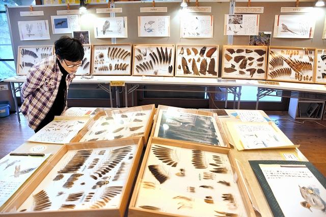 野鳥の羽根が並ぶコレクション展=18日、福井県敦賀市樫曲の中池見湿地のビジターセンター