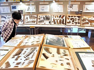 中池見の野鳥「羽根」で知って コレクション展、敦賀市