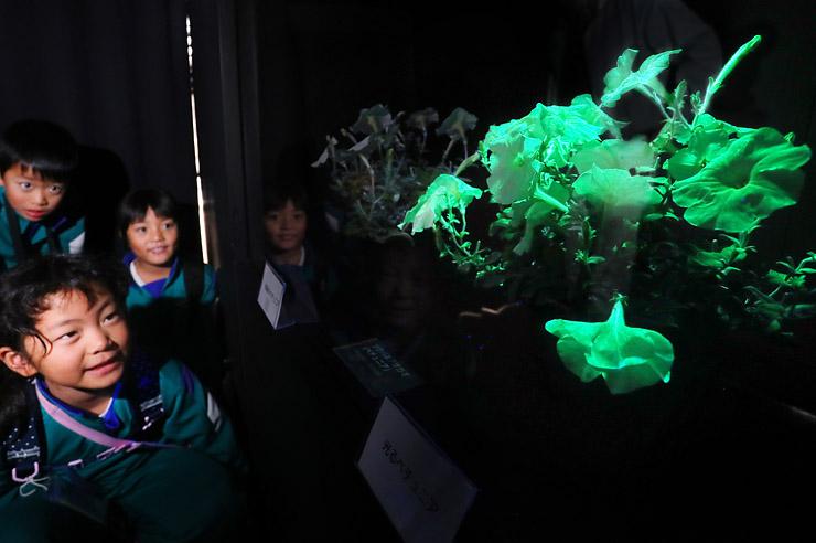 暗闇の中で緑色に光るペチュニア=県中央植物園