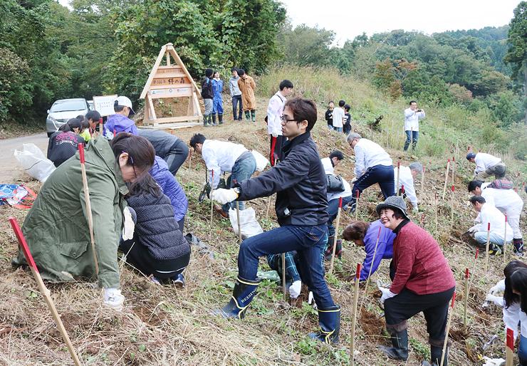 合掌造り家屋の形をした看板(後方)をバックに、茅の苗を植える住民ら