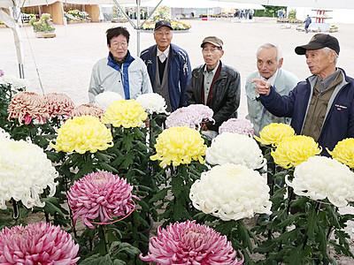 鮮やかに大輪咲き競う 県菊花大会