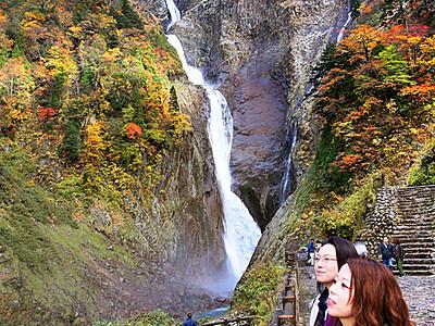 称名滝で紅葉見頃 山肌に雪